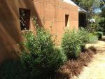 images/earthy_waterwise_garden_margaret_river/IMG_0237.jpg